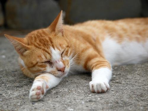 酔ってふて寝な感じのネコ